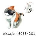水彩で描いた三毛猫と白ねずみ 60654281