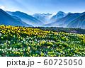 駒ヶ根の春 60725050