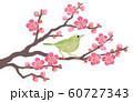 紅梅の枝にウグイス 60727343