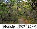 アルゼンチン パタゴニア ロス・グラシアレス国立公園 森 60741046