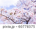 桜、青空、雲 60778375