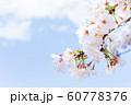 桜、青空、雲 60778376
