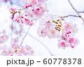 桜、春の雰囲気 60778378