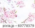 桜、春の雰囲気 60778379