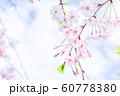桜、春の雰囲気 60778380