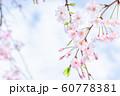 桜、春の雰囲気 60778381