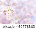 桜、春の雰囲気 60778383