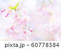 桜、春の雰囲気 60778384