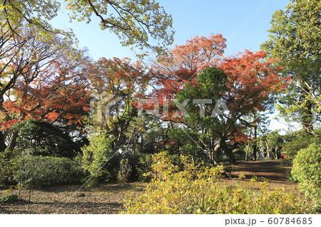 秋の戸定が丘歴史公園 千葉県松戸市 60784685