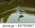 京都迎賓館 中庭 60793867