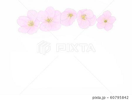 花・桜・五輪・クローズアップ・中央・横配置 60795842