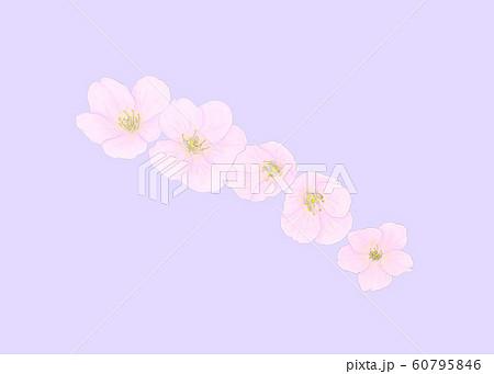 花・桜・五輪・クローズアップ・斜め配置 60795846