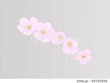 花・桜・五輪・クローズアップ・斜め配置 60795848