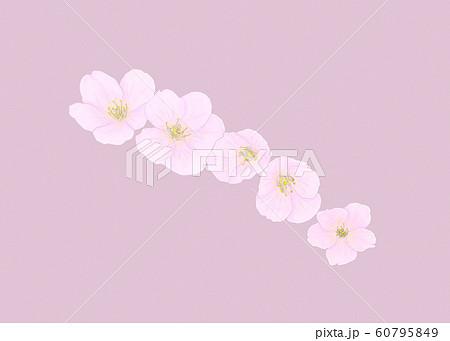花・桜・五輪・クローズアップ・斜め配置 60795849
