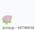 花・プリムラ・ジュリアン・サクラ草・ピンク・余白大 60796638
