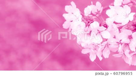 桜の花 60796955