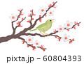 白梅の花と鳴くウグイス 60804393