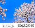 桜の花のフレーム 60832545