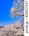 桜の花のフレーム 60832547