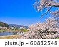 斐伊川堤桜並木 60832548