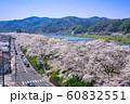斐伊川堤桜並木 眺望 60832551