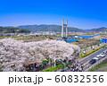 斐伊川堤桜並木 眺望 60832556