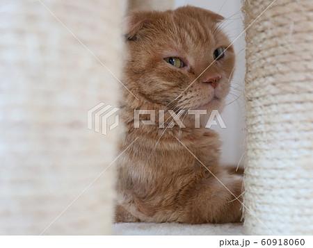 物陰に隠れる猫 60918060