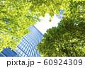 緑の多いオフィス街の風景 60924309