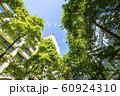 緑の多いオフィス街の風景 60924310