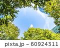 緑の多いオフィス街の風景 60924311