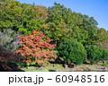 秋の公園 60948516