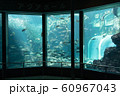 水族館 大水槽 メイン水槽 展示 60967043