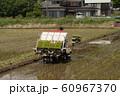 田植え 稲作 農耕 農家 60967370