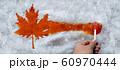Maple Taffy Leaf 60970444