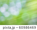 緑のボケと光 60986469