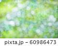 緑のボケと光 60986473