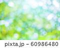 緑のボケと光 60986480