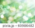 緑のボケと光 60986482