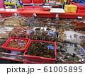 チャガルチ市場(釜山/韓国)Jagalchi Market 61005895