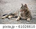 昼下がりの猫 61026610