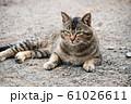 昼下がりの猫 61026611