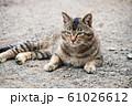 昼下がりの猫 61026612