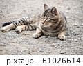 昼下がりの猫 61026614