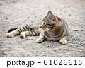 昼下がりの猫 61026615