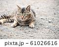 昼下がりの猫 61026616