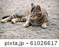 昼下がりの猫 61026617