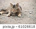 昼下がりの猫 61026618
