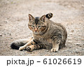 昼下がりの猫 61026619