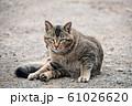 昼下がりの猫 61026620