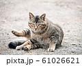 昼下がりの猫 61026621